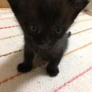 生後3ヵ月 子猫 里親さん募集