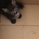遺棄されていた仔猫ちゃんの里親さん募集