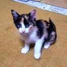 かわいい保護猫もらってください。