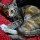 4月生まれの困った顔子猫