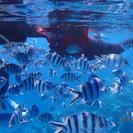 青の洞窟&熱帯魚と泳ぐシュノーケルツアー - 中頭郡