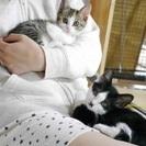 生後2ヶ月の子猫の里親募集