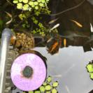 予約残り僅か!ミックスメダカ&ミニ水草&産卵床セット