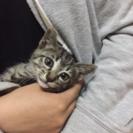 生後2カ月くらいの子猫ちゃんです♪
