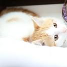 ハート柄の可愛い茶トラ猫★里親募集