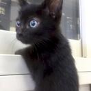 8月6日(日) 猫の譲渡会 名古屋市港区 社会福祉法人 中部盲導犬...