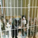 仔猫達の明日を繋ぐリレーにご協力のお願い♪