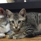 約2ヵ月の子猫