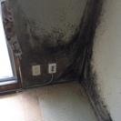 屋内のカビは、百害あって一利なし。