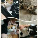 子猫の譲渡会in久留米の画像