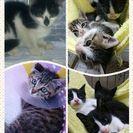 子猫の譲渡会in久留米 - 久留米市