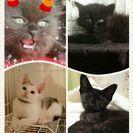 子猫の譲渡会in久留米 - その他