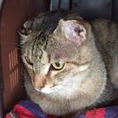 迷い猫保護してます ー経堂から豪徳寺で保護ー