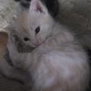 黒2匹、薄茶1匹、生後2週間の子猫