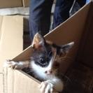 仕事場にいる子猫ちゃんです。