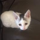 頭の模様がチャーミングな白子猫