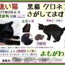 尼崎市西難波町 蓬川沿い公園付近~迷い黒猫