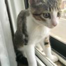 3ヶ月の可愛い仔猫ちゃんの画像