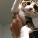 3ヶ月の可愛い仔猫ちゃん - 猫