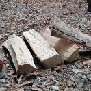 広葉樹カシの薪!長さ35㎝前後。0.1立米価格。平成29年1月伐採...