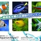 観賞魚水槽の管理・お掃除代行