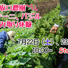 愛知の秘境・豊根村三沢高原坂口農園で、『バジル、ズッキーニ摘み取り...
