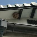 蜂の巣駆除します!