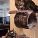 3歳、兄妹猫、一緒での募集です!
