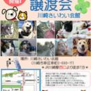 7/23  保護犬猫 譲渡会 拡散希望