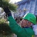 【浜松市で募集】植木屋未経験大歓迎!植木カットデザイナーの募集です。