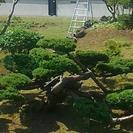 庭、無料見積、剪定、伐採、草刈り、庭そうじ、冬囲い。