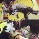 3びきの子猫