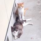 緊急!居場所のない多頭崩壊猫たちを助けて!