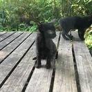 黒い子猫のエルとエム