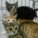 美猫3兄妹、生後1ヶ月半くらい。