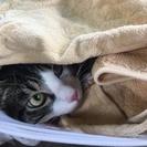 オス猫 怖がりな猫です。
