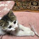 生後約3か月程度の子猫ちゃん