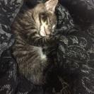 生後3週間くらいのオス猫です。