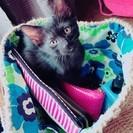 黒猫女の子第2弾