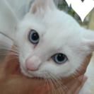 真っ白な猫ちゃん