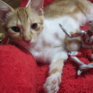 4月生まれウルトラマン好き子猫