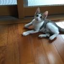 生後3ヶ月✨可愛いキジトラです