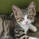 この春 裏山で生まれた男の子の猫です。とても人懐っこいです。