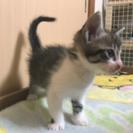 生後約1ヶ月の子猫の里親募集ฅ^•ﻌ•^ฅ