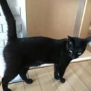 今年2歳になる黒猫ฅ( ̳• ·̫ • ̳ฅ)