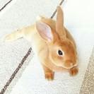 可愛い子ウサギあげます