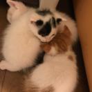 生後数週間の子猫