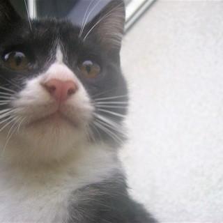 (ノ*ФωФ)ノ<動画あり 野良の子猫 貰い手がなくて困ってます。...