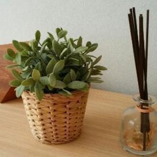 観葉植物 フェイク