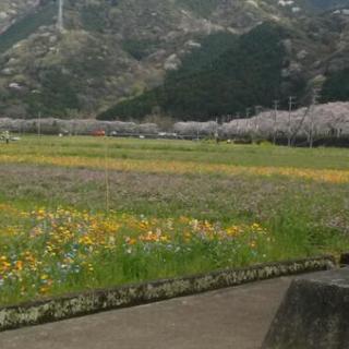 草刈り、草むしり